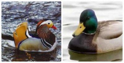 Перелетные птицы примеры