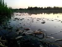 Отчего загрязняется вода