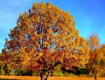Пришла золотая осень сочинение