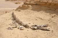 Египет на каком материке расположена страна
