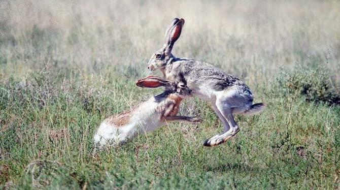 Скорость зайца равна