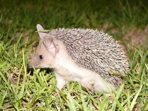 Какие животные встречаются в степях