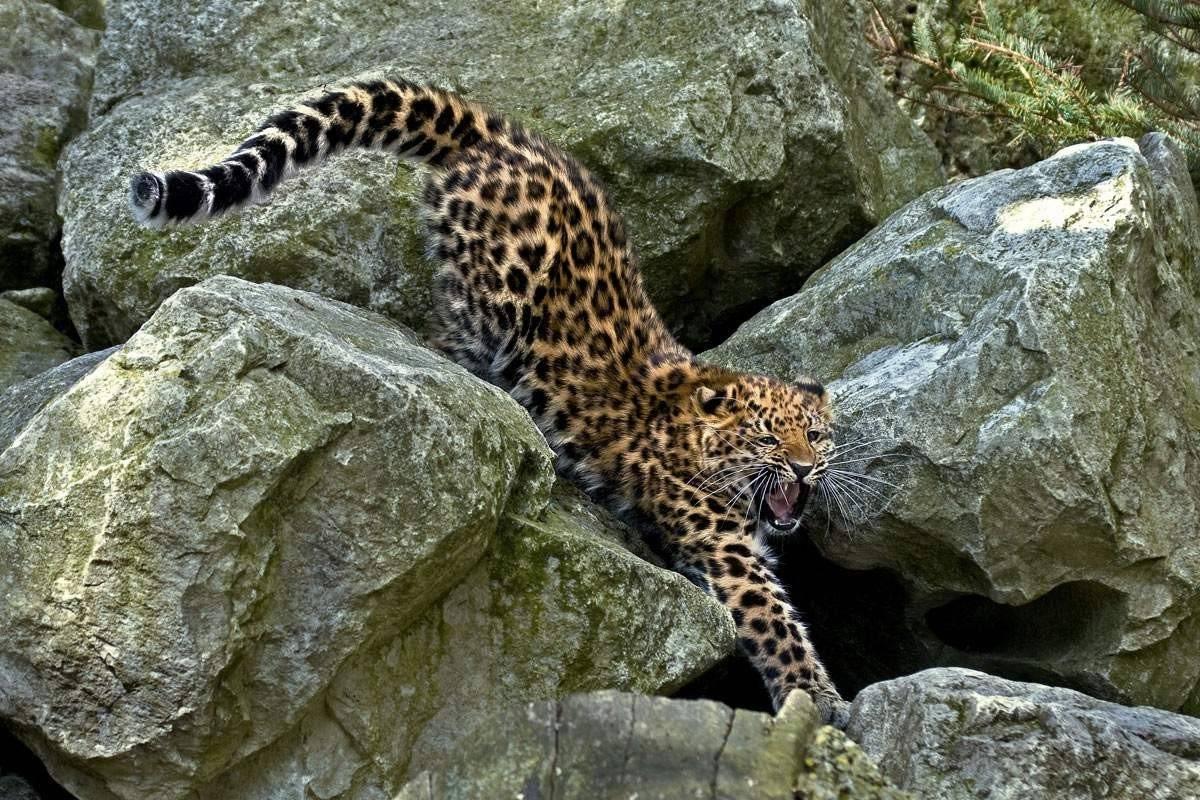 Хищники животные фото