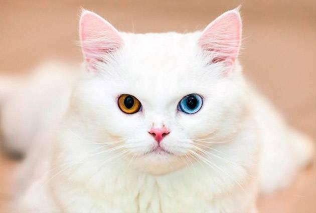 Имена для белых кошек девочек
