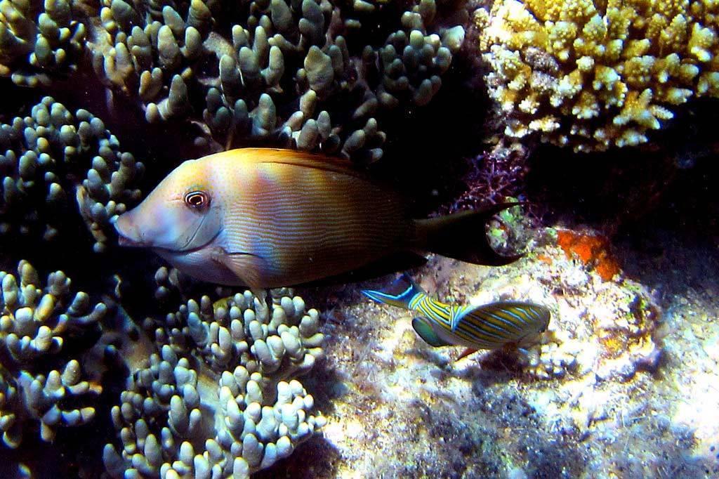 Великий барьерный риф
