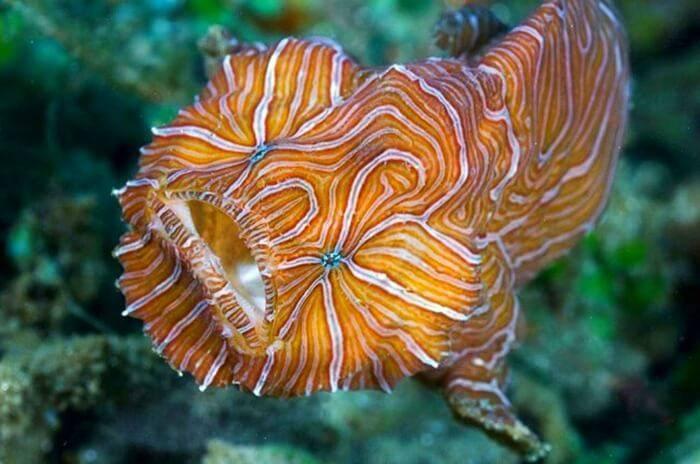 Необыкновенные рыбы