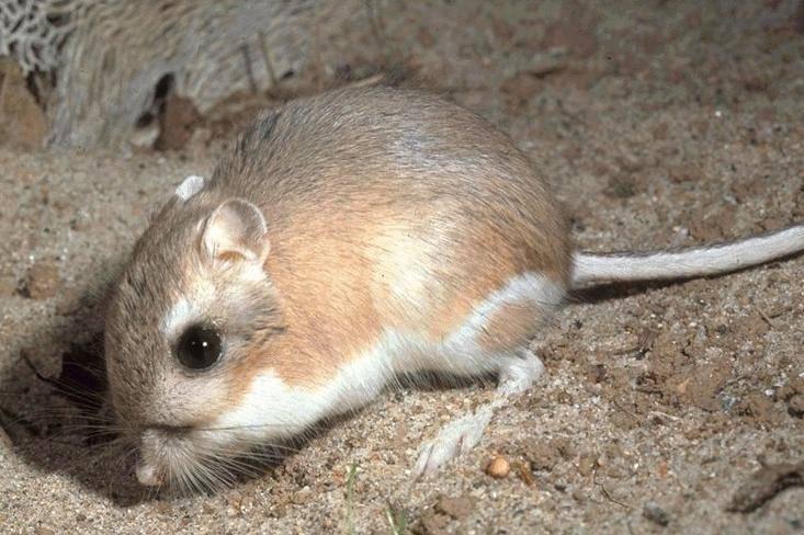 Что едят мыши в домашних условиях