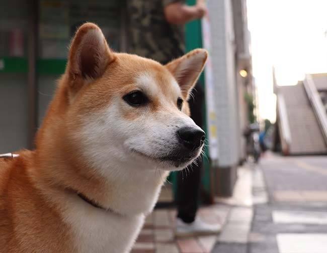 Сочинение описание собаки