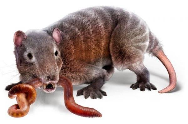 Эволюция животного мира на земле