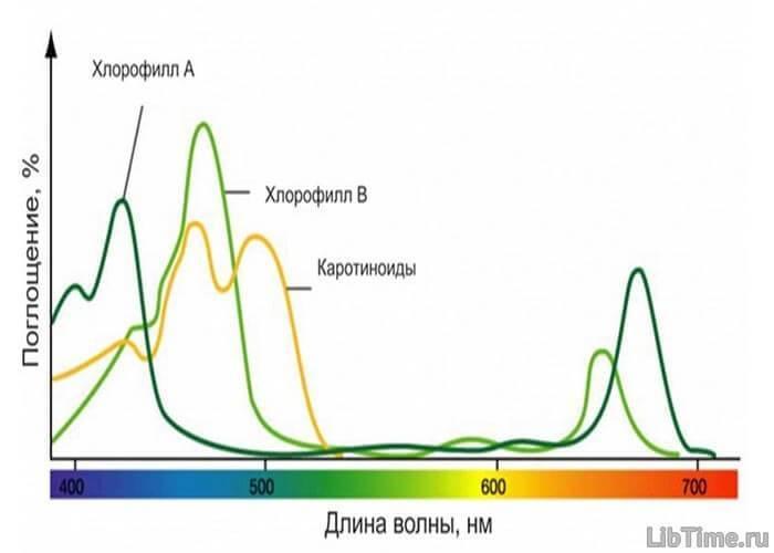 Растения в процессе фотосинтеза потребляют
