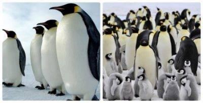 Почему пингвин птица