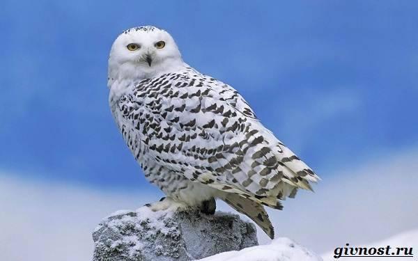 Животные арктики фото и описание