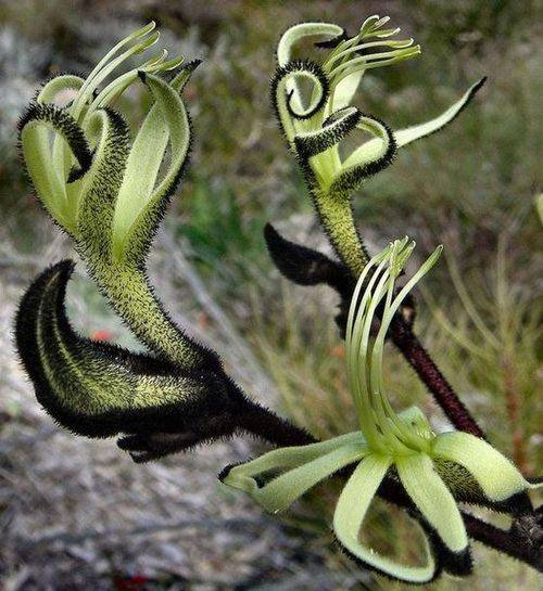 Растения австралии список