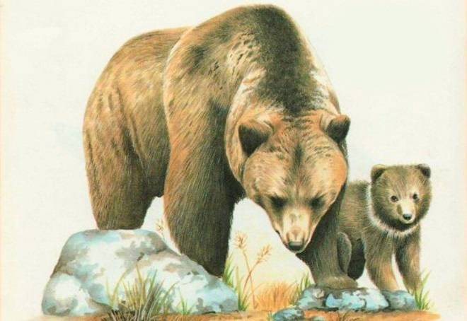 Детские картинки животных для детского сада