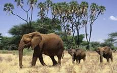Слон животное полезное