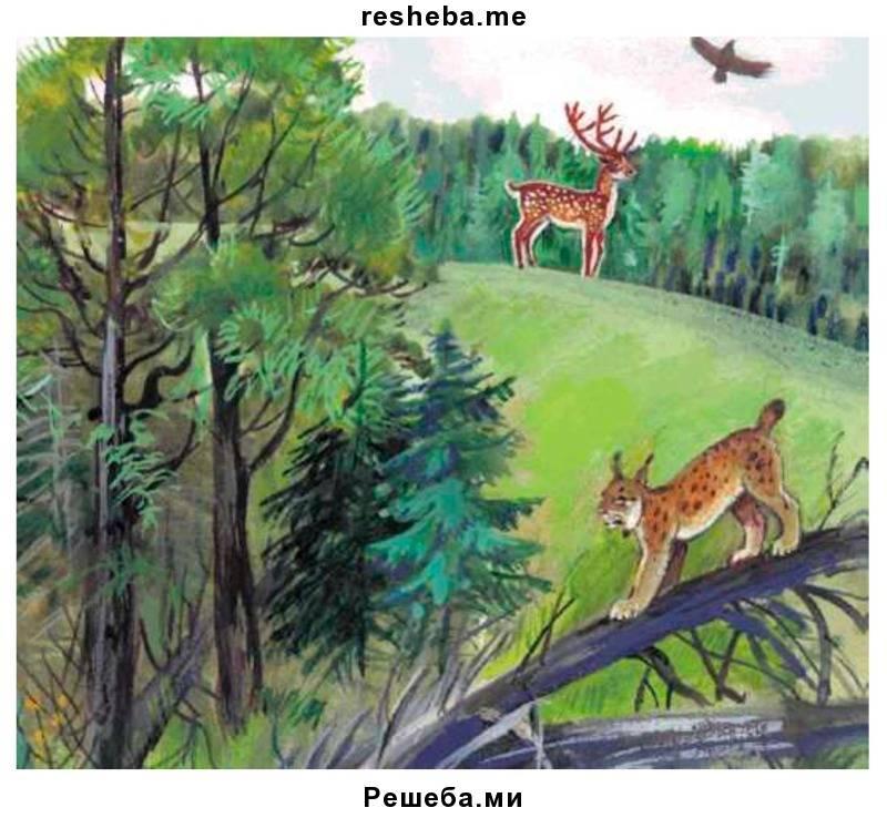 Особенности тайги смешанных и широколиственных лесов