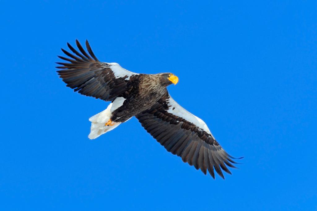 Размеры птиц