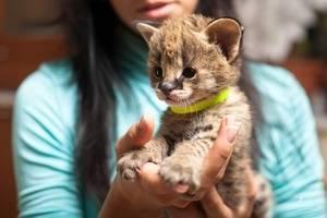 Кошки маленького размера породы