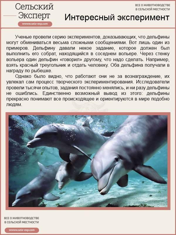 Млекопитающие рыбы список