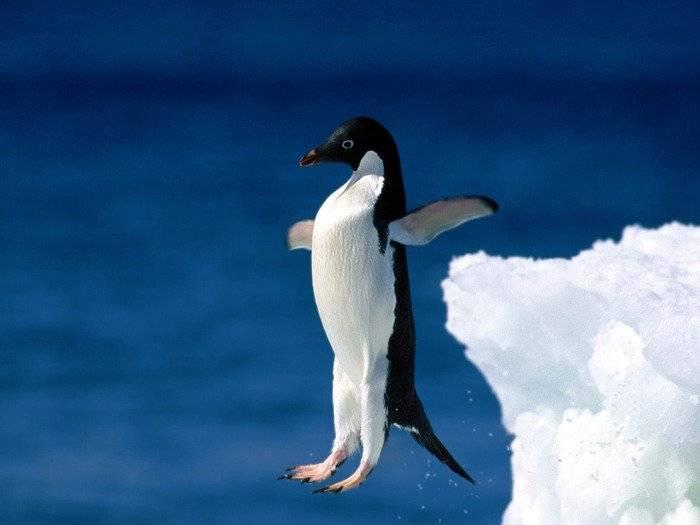 Факты про пингвинов