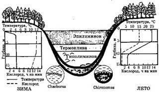 Лентические экосистемы