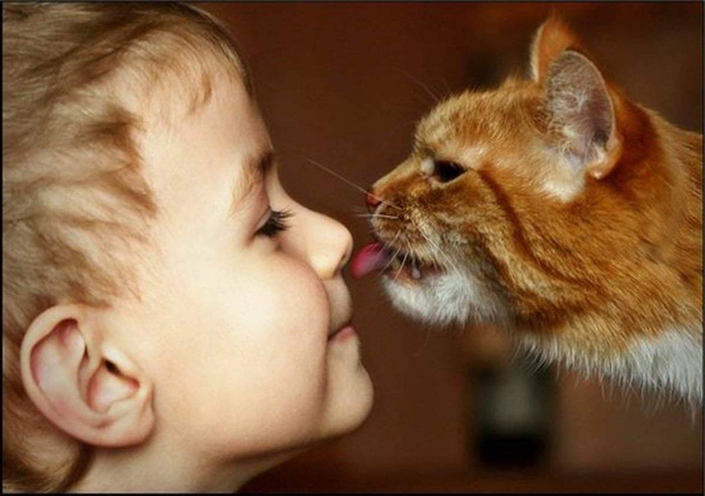 Какие породы кошек любят детей