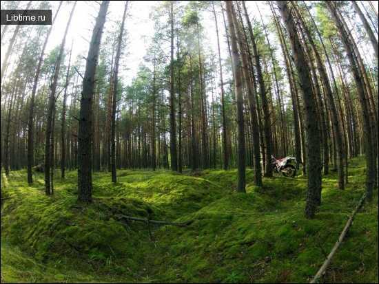 Значение леса в жизни человека кратко