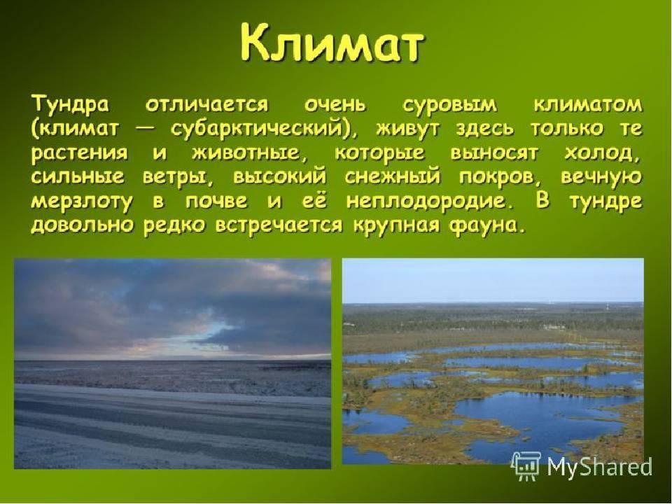 Особенности климата тундры