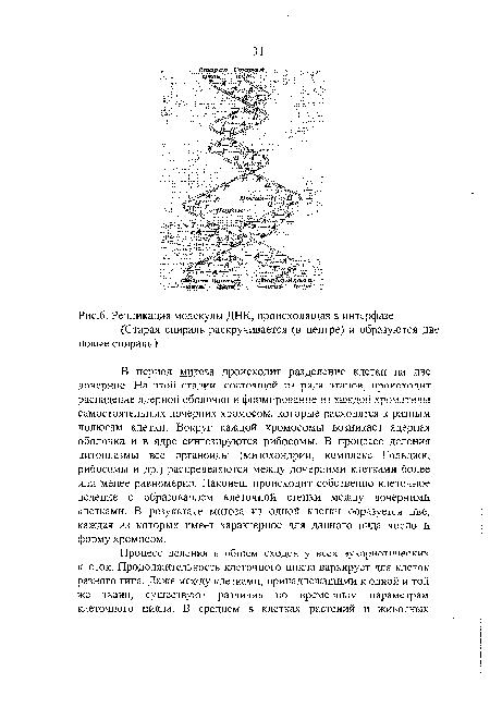 Особенности интерфазы