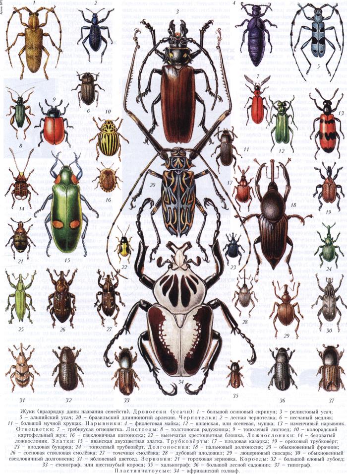 Жуки в природе