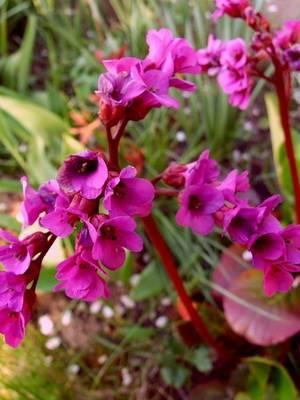 Растения средней полосы россии фото и названия