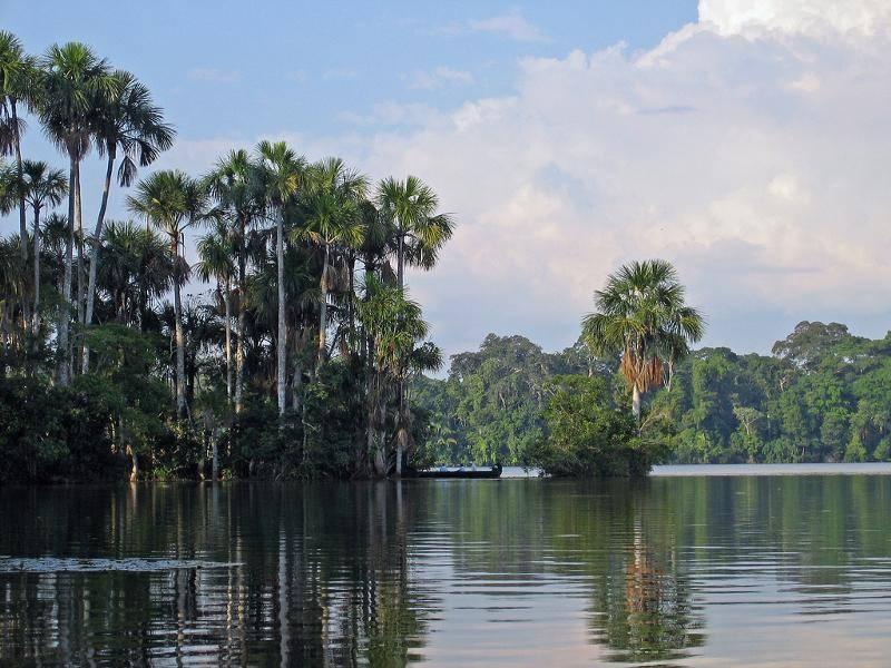 Лесные ресурсы бразилии