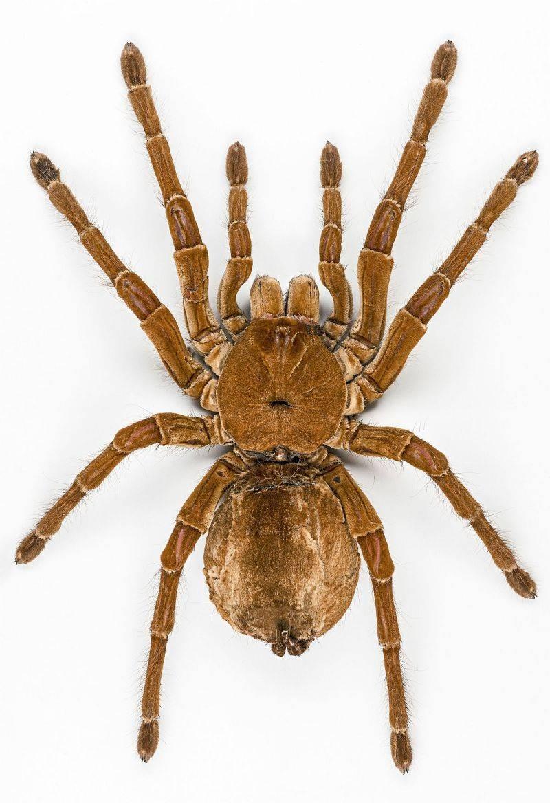 Среда обитания скорпионов сенокосцев клещей пауков