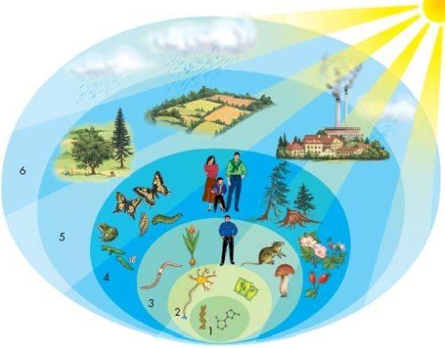Экосистемный уровень организации жизни