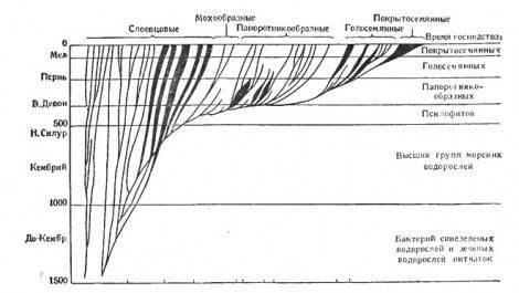 Основные этапы эволюции растений