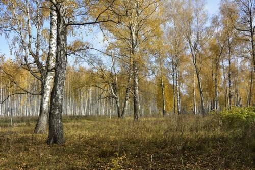 Много лесов