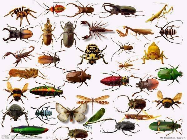 Сколько видов животных на земле