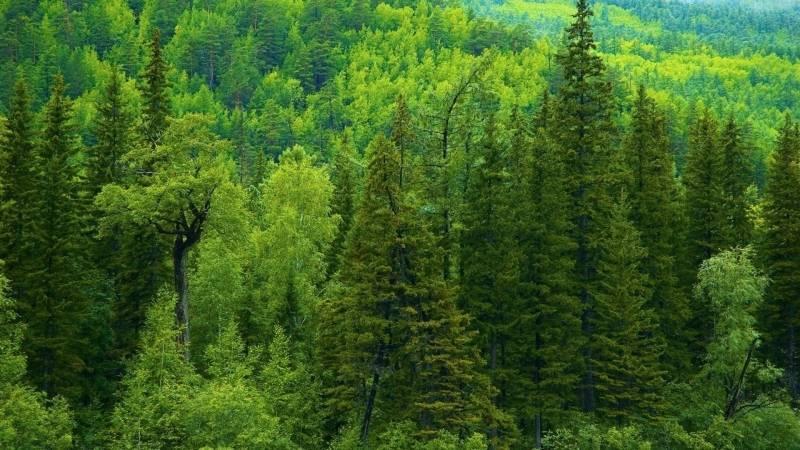 Охрана природы тайги