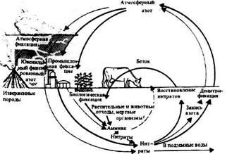 Понятие биосфера впервые сформулировал