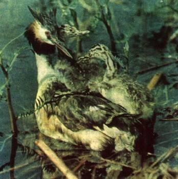 Когда птицы вьют гнезда время года