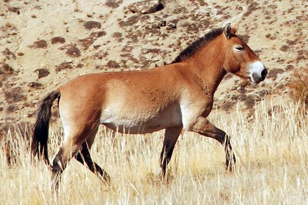 Животные пустыни африки