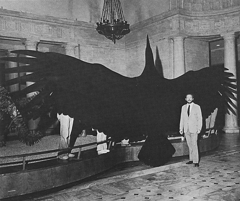 Самая большая птица на планете