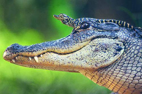 Какие бывают рептилии