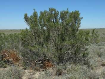 Особенности растений пустыни