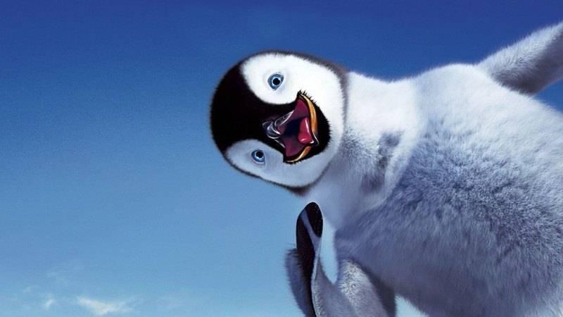 Как спят пингвины