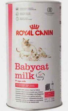 Можно ли кошкам давать молоко