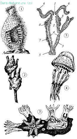 Губка многоклеточный организм