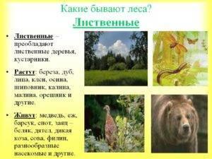 Разновидности леса в россии