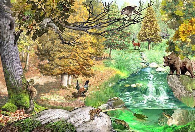 Почему природная экосистема смешанного леса является стабильной