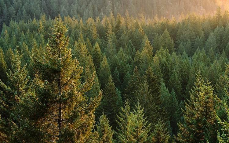 Страны с наибольшей обеспеченностью лесными ресурсами
